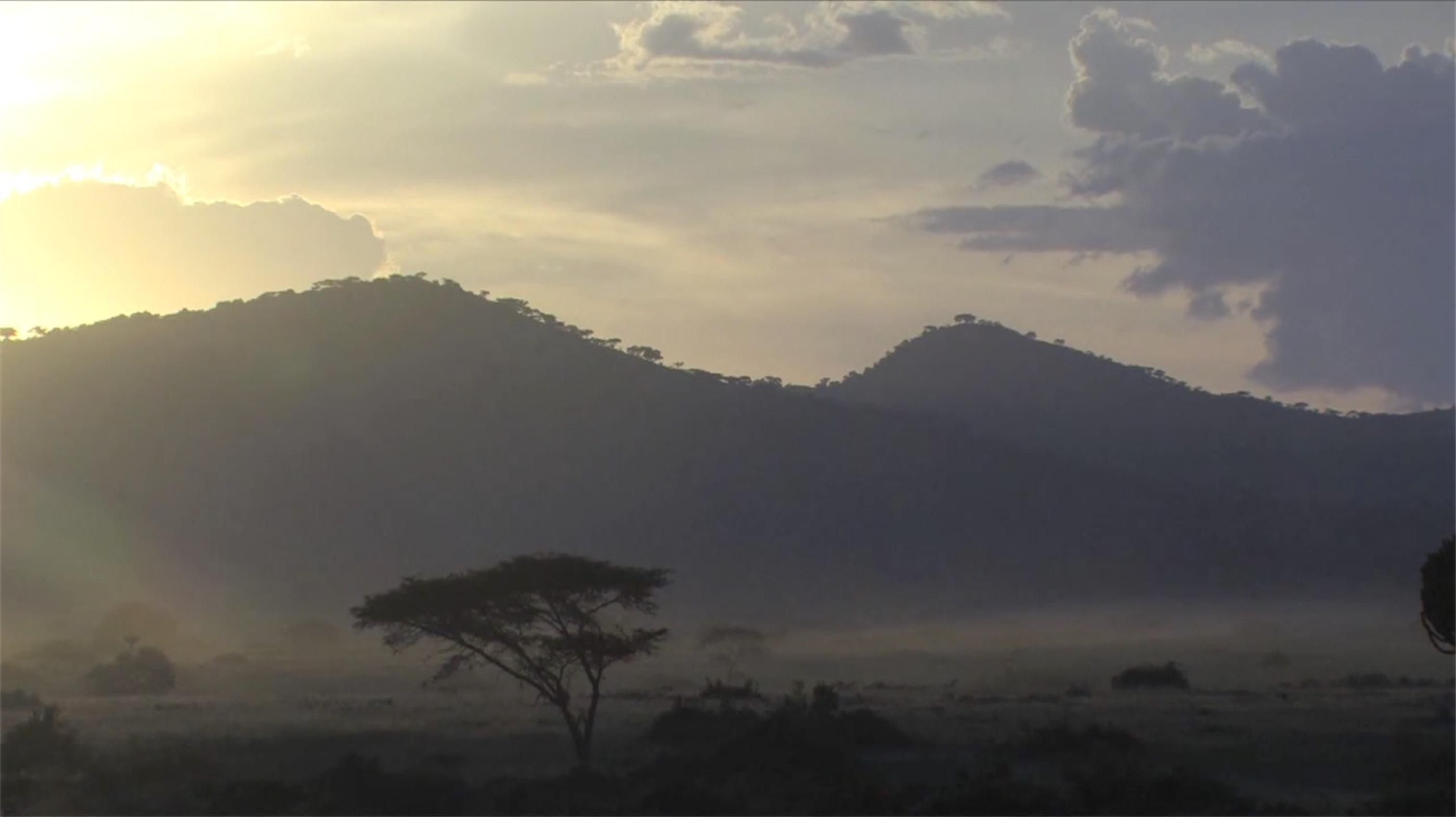 Le Réveil des Virunga